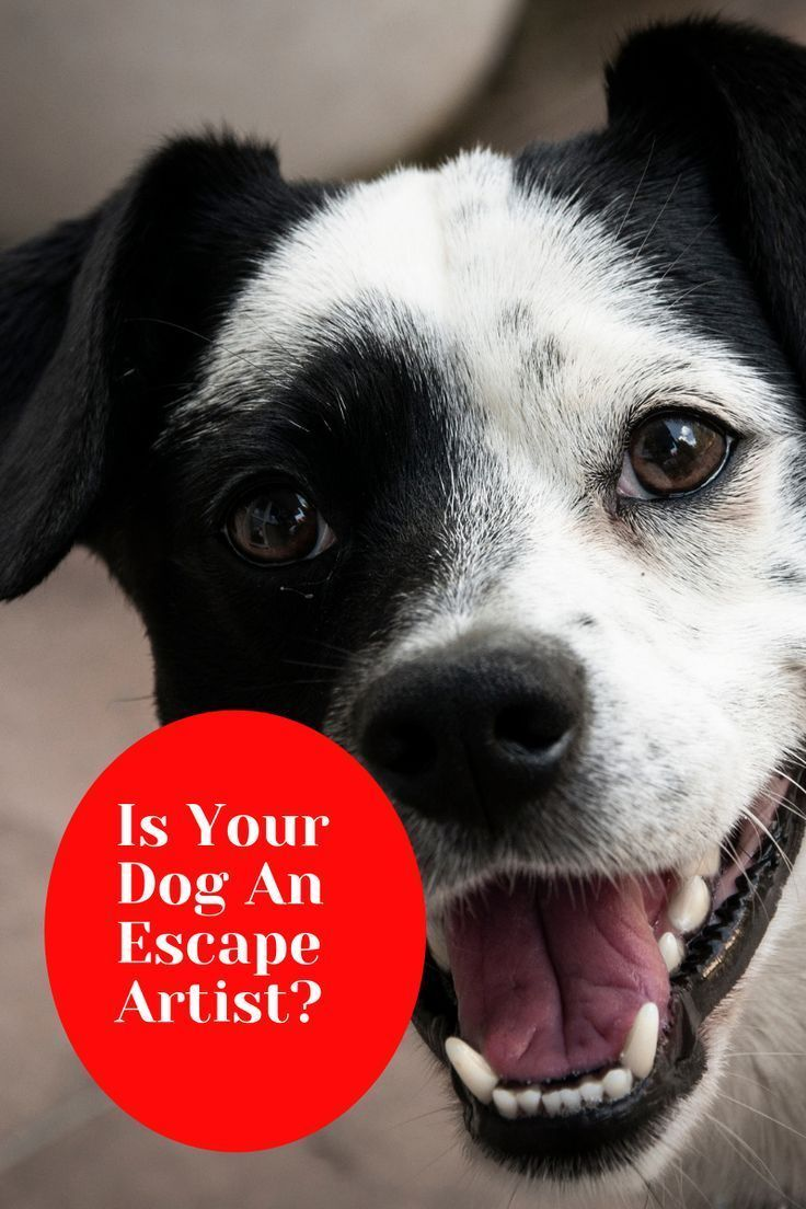 Escape Behaviour in Dogs Dogs, Your dog, Dog behavior