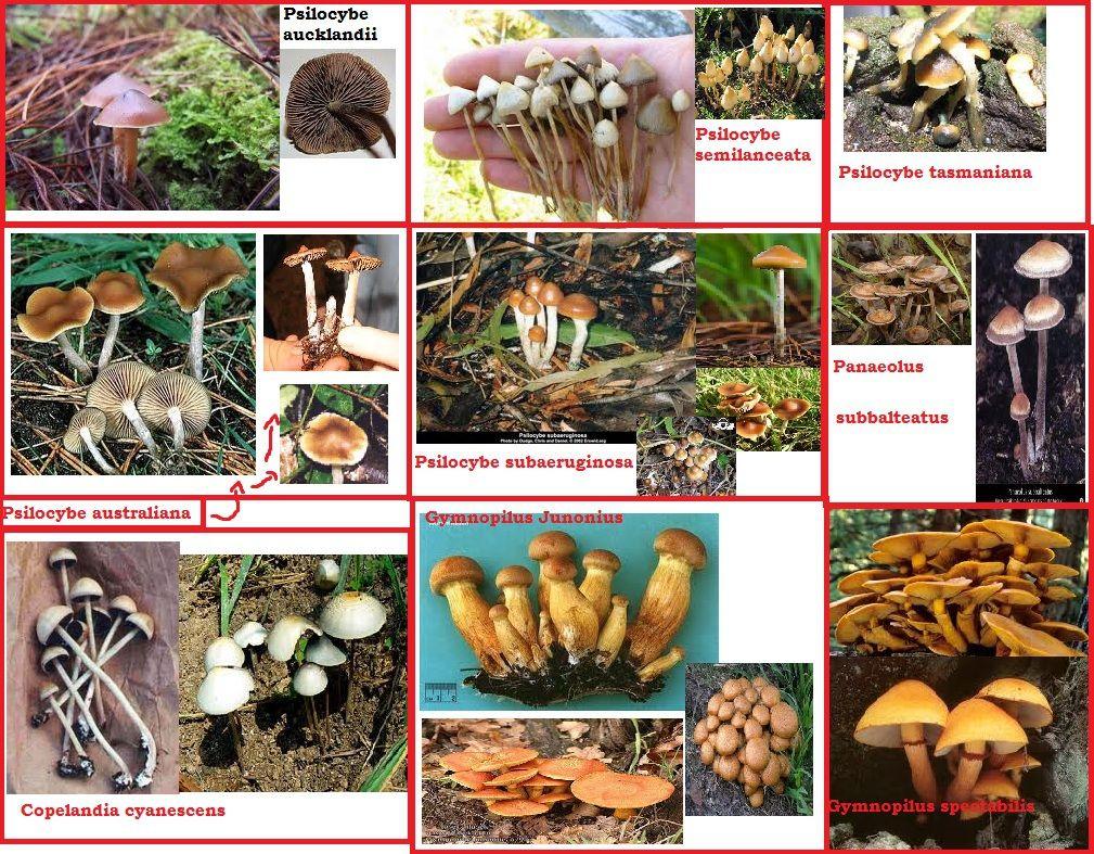 Pin On Mushrooms Wild Edible