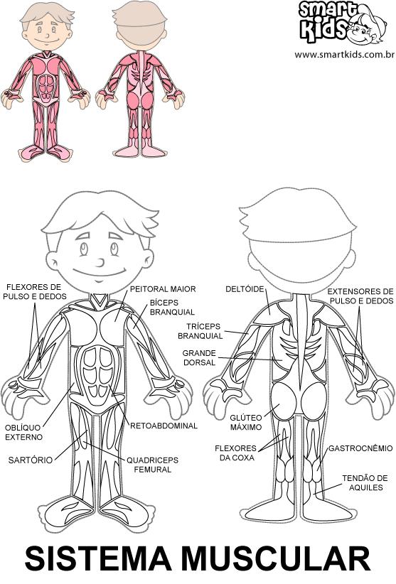 Colorir Desenho Sistema Muscular | educación | Pinterest | Mein ...
