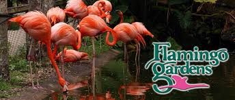 DAVIE, FL--Flamingo Gardens [late 1960s]