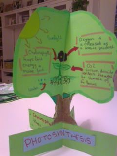 Made in England: Photosynthesis Trees