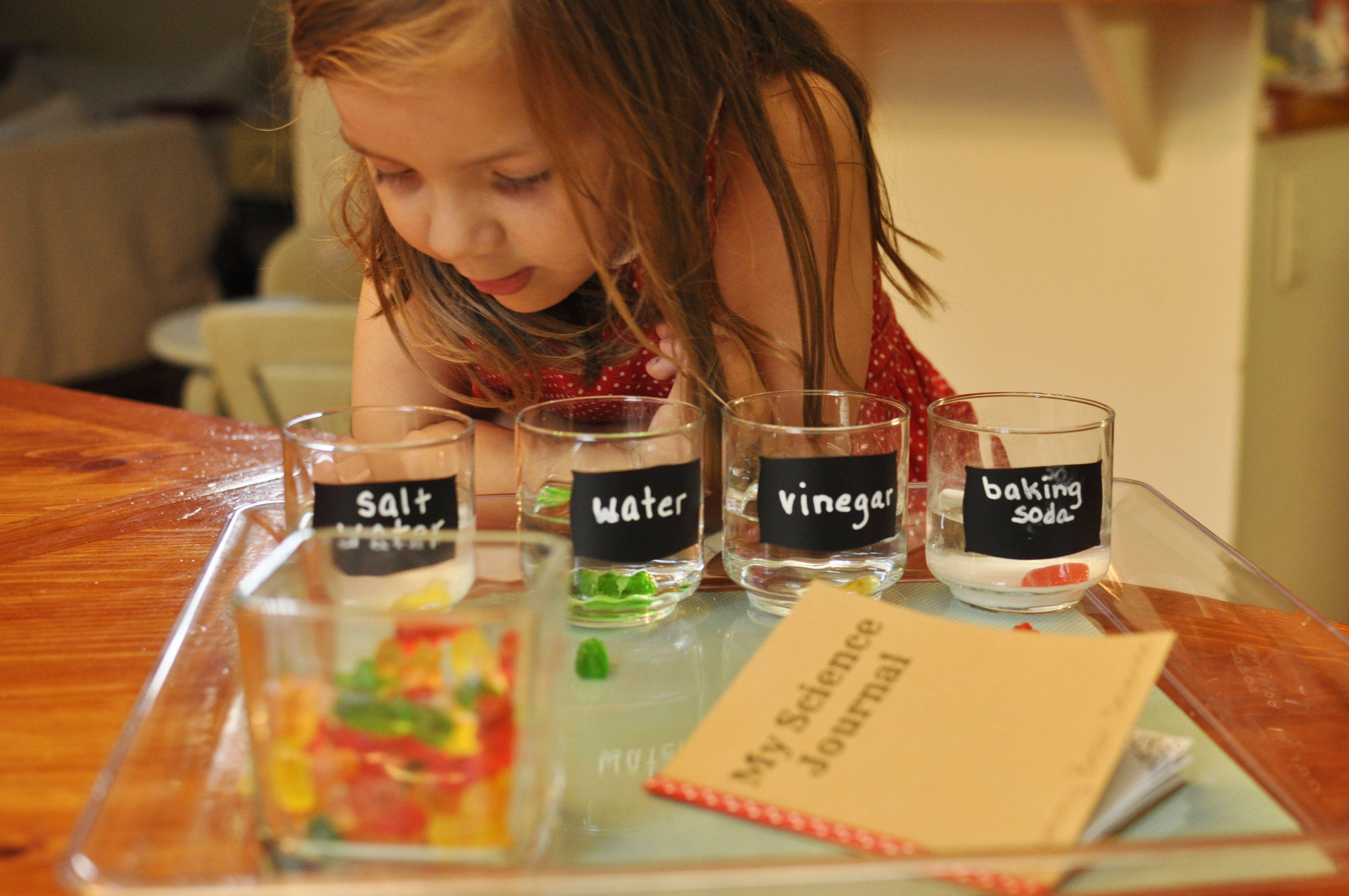 Growing Gummy Bears Experiment