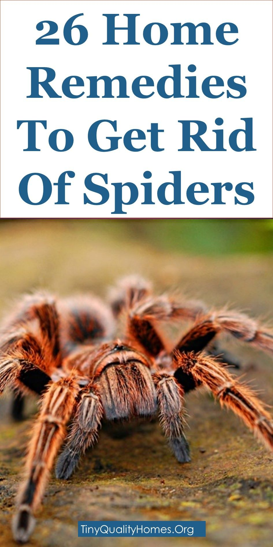 26 Home Remedies Traps And Repellents To Get Rid Of Spiders
