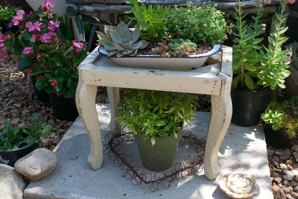 Old enamel pan planter