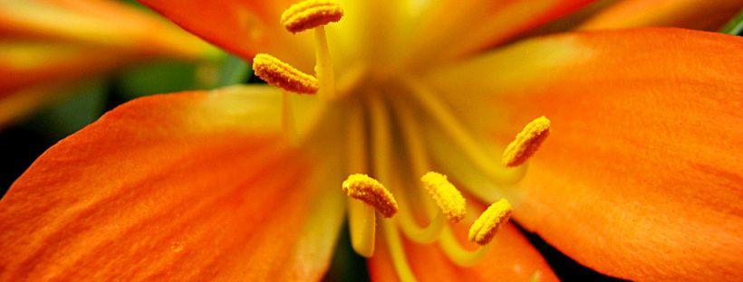 flor-laranja