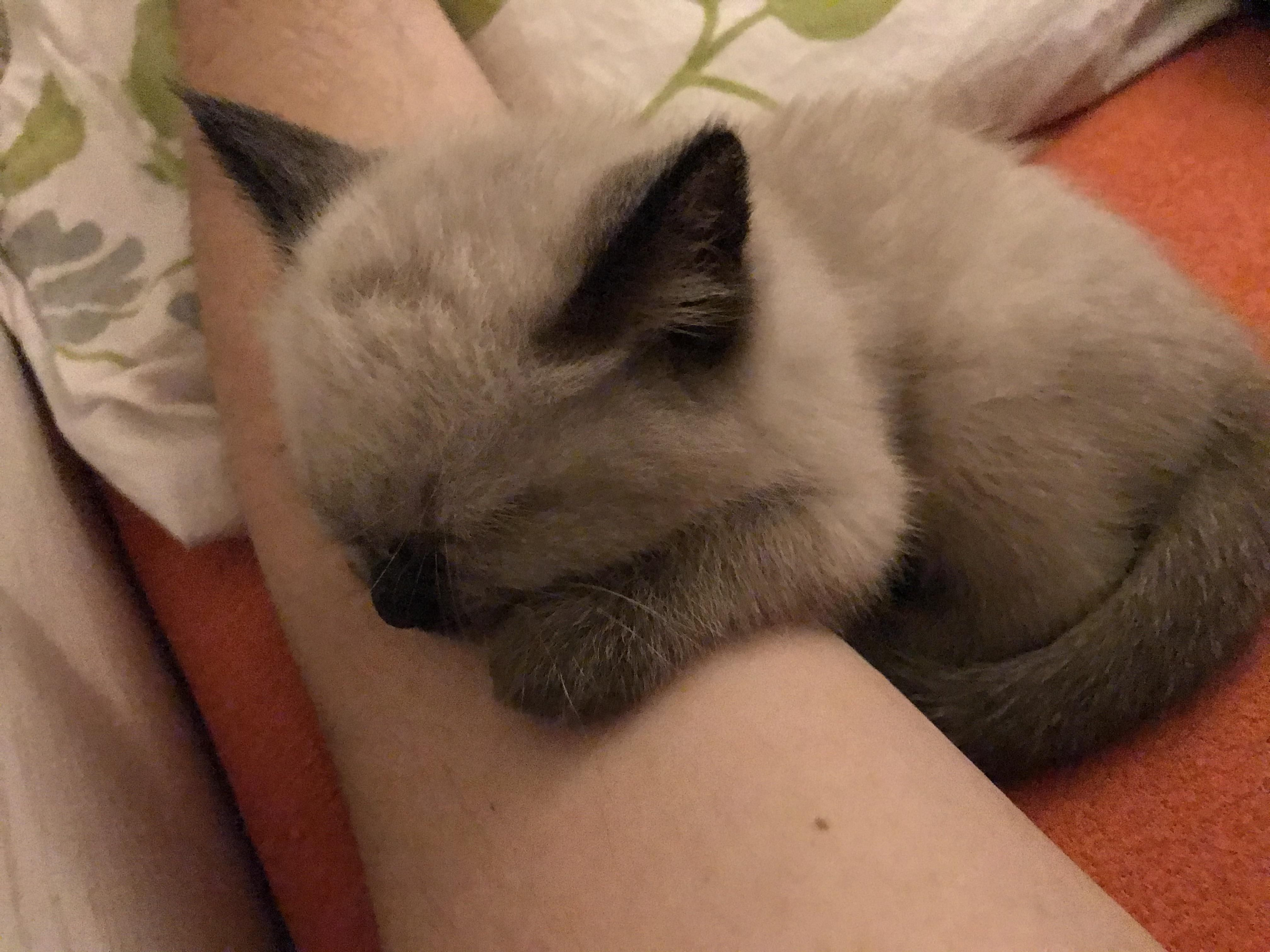 Real Estate Marketing Reviews My New Kitten Finally Began To Like Me And Fell Asleep On My Arm Can T Move Now In 2020 Cute Animals Kitten Aww