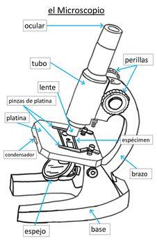 Spanish Elementary Microscope Poster Elementary Spanish Microscopic Biology Classroom