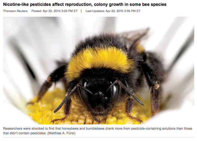 Bees Getting Hooked on Pesticides