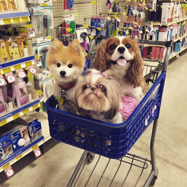 remember nothing says i love you quite like a shopping spree petsmartcart photo credit sadie lady fb