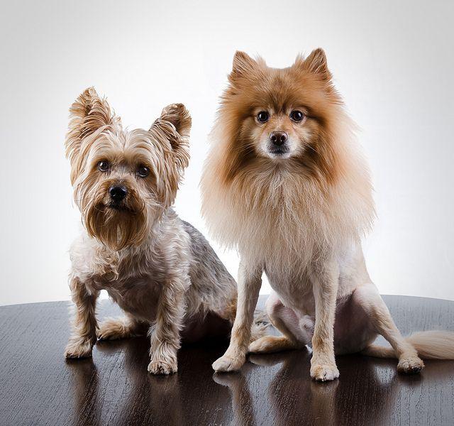 Bob and Marley (my doggies)