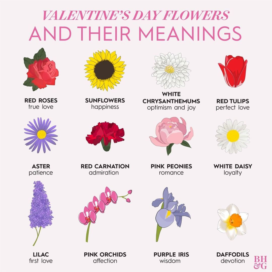 The Meaning Of Flowers By Urban Botanicals Flower Tattoo Meanings Flower Meanings Flowers