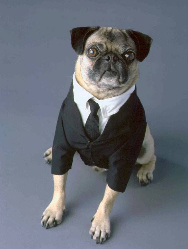 Frank The Pug Men In Black Pugs Pinterest Pugs Dogs And