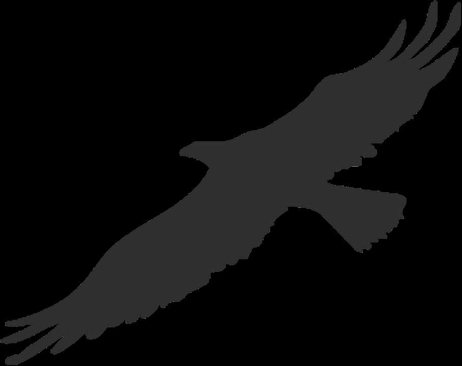 Картинки силуэт орла
