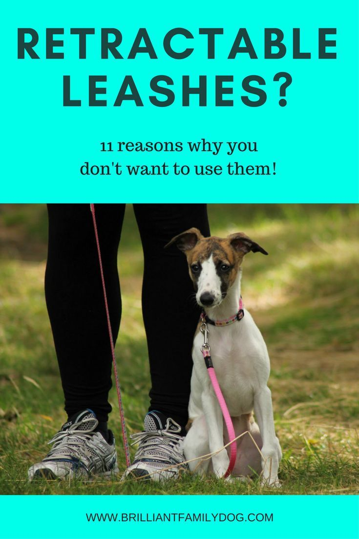 Are Retractable Leads Safe Or Useful 11 Reasons Why You Don T