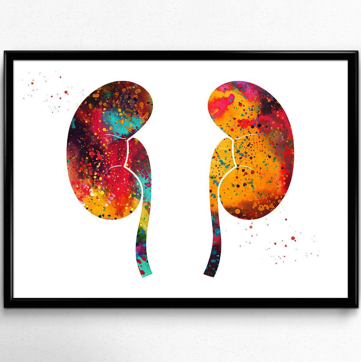 The Kidneys Anatomy Watercolor Print Human Kidneys Poster