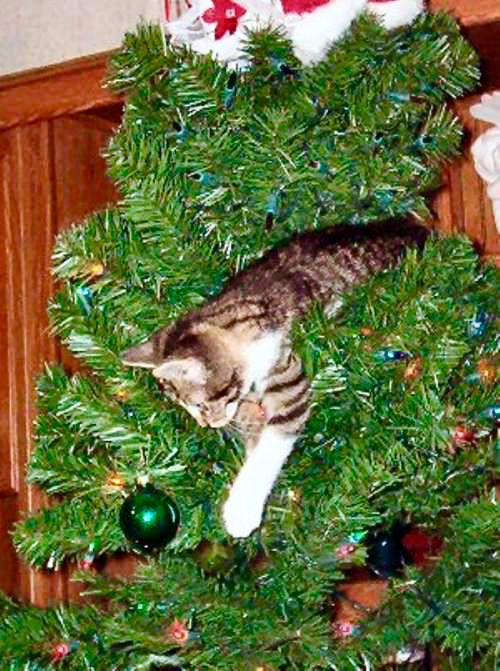The Cat In The Christmas Tree Is Ready To Pounce Cat Christmas Tree Christmas Cats Christmas Tree Pictures