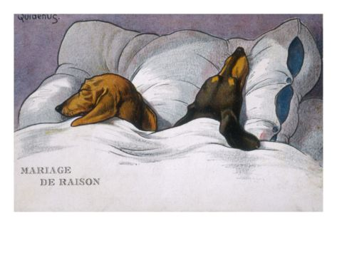 Dachshunds In Bed A Marriage Of Convenience Giclee Print Art Com Dachshund Puppy Funny Sleeping Dogs Funny Dachshund