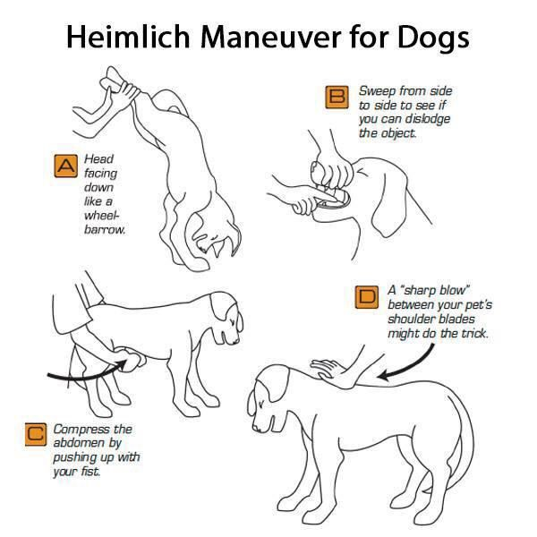 I Will Help All Heimlich Maneuver For Dogs First Aid For Dogs
