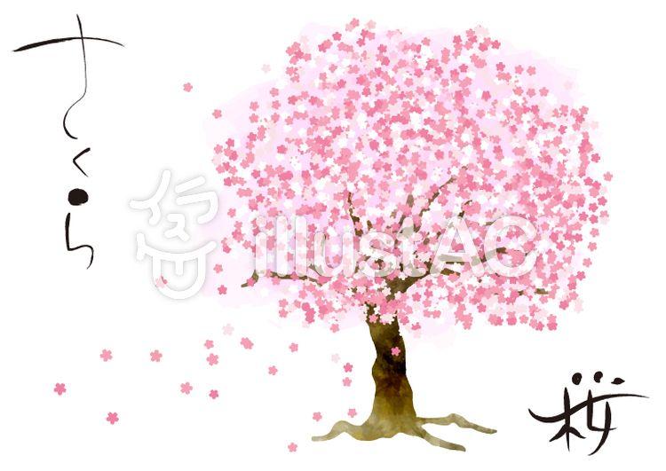 無料イラスト素材水彩風の一本桜 おしゃれ 和風 フリー素材