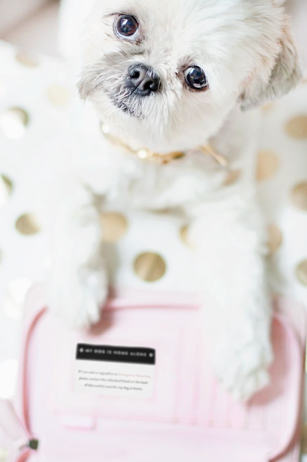 image regarding My Dog is Home Alone Card Printable titled My Puppy is Residence By yourself Card All Pertaining to Puppies Dog protected, Pet