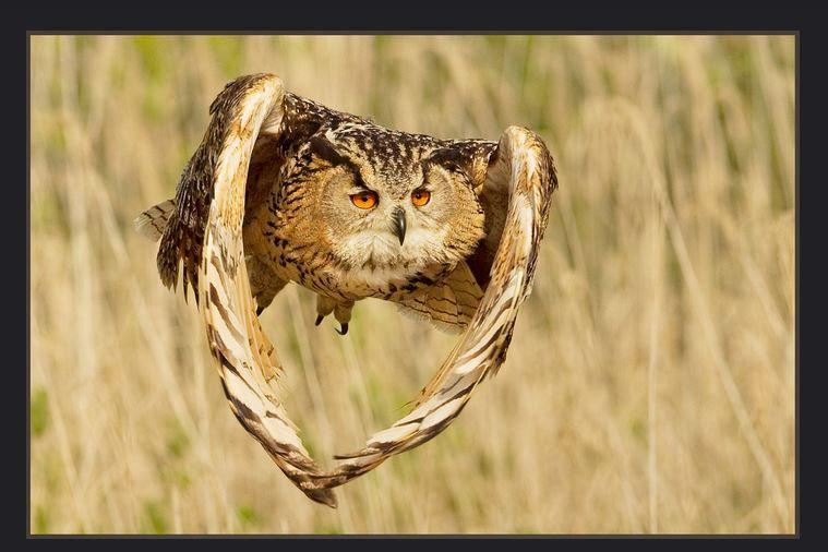 40 Award Winning Wildlife Photography