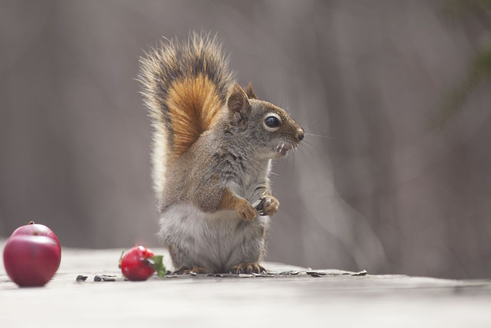 Great time by Andre Villeneuve on 500px