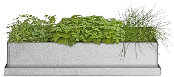 Windowsill Herb Garden Gift This To Mom So She Grow 640 x 480
