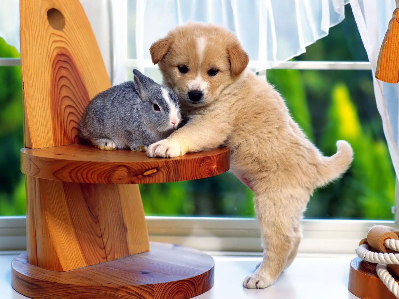Открытка с милыми животными