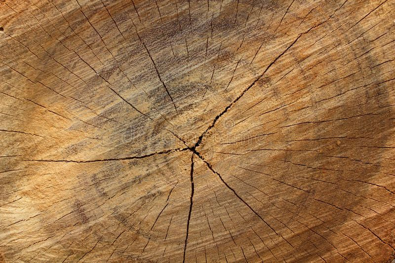 Wood texture background,ideal for backgrounds and textures. , #Sponsored, #background, #texture, #Wood, #textures, #backgrounds #ad #woodtexturebackground Wood texture background,ideal for backgrounds and textures. , #Sponsored, #background, #texture, #Wood, #textures, #backgrounds #ad #woodtexturebackground