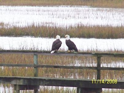 Pawleys Island, SC's photo: Its rare to see one but TWO?!?!
