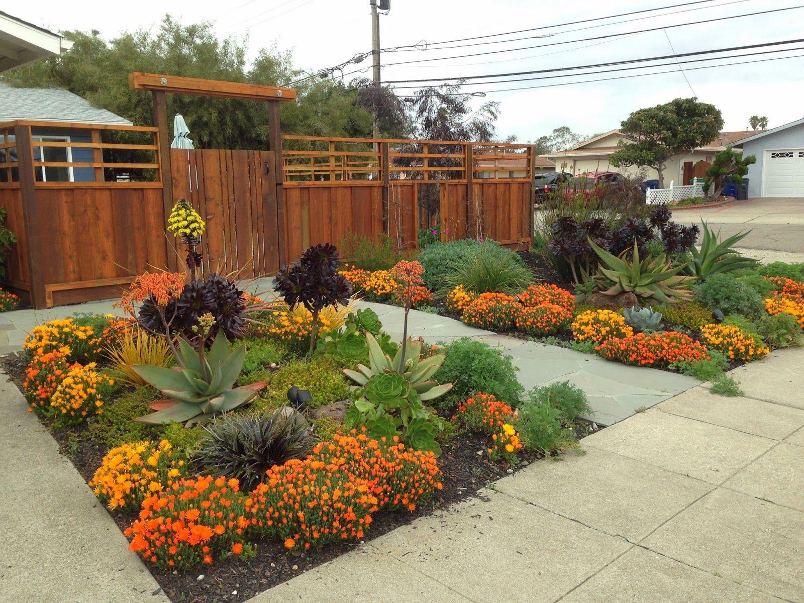 Farallon Gardens Alameda Drought Tolerant Garden February Blooms