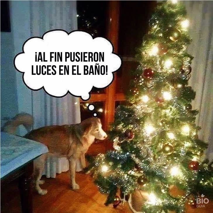 Imagenes Graciosas Para Whatsapp Memes Chistes Chistesmalos Imagenesgraciosas Humor Humor Spanish Jokes Pinterest Humor
