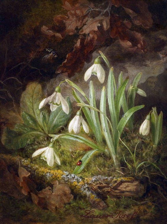 Thewriterofthewoods Forest Floor Piece With Snowdrops By Josef Lauer Forest Floor Paintings I Love Painting