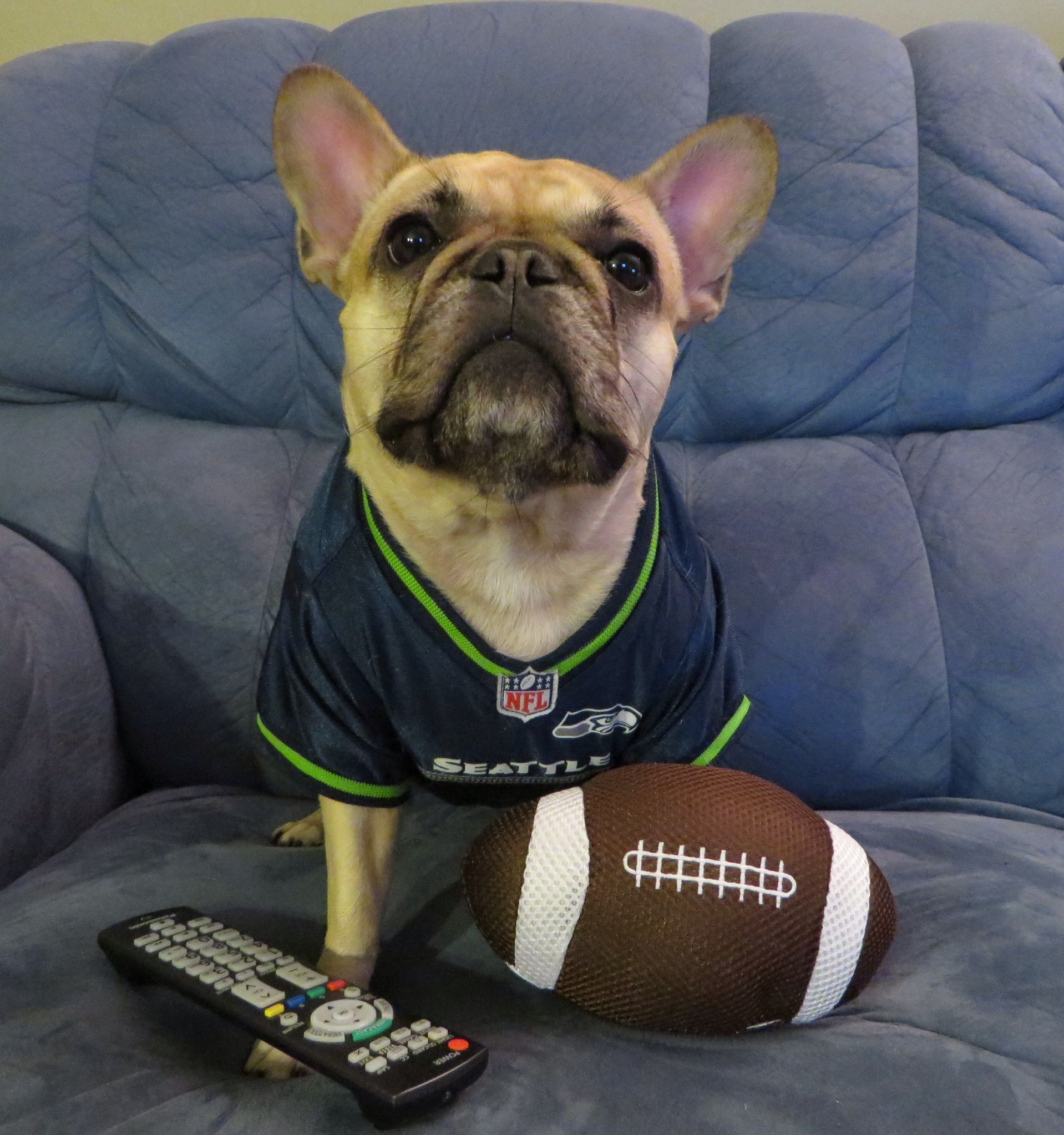 Roxy is the 12th Dog Seahawks Superbowl Champs Superbowl