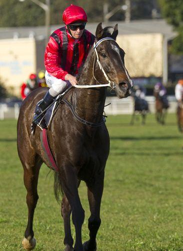 Laser Hawk Wins Newmarket Newmarket Racing News Horse Racing