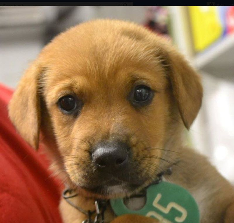 Margo Tike Ad 07 17 17 Rescue Dog Village Guardian Inc Dogs Rescue Dogs Rescue