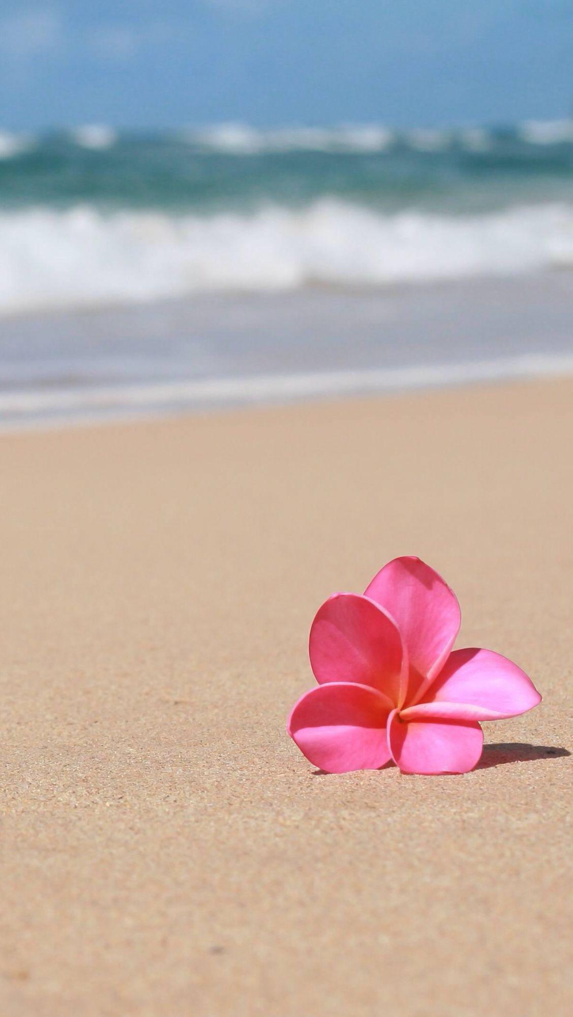 Hawaii Beach Wallpaper Flower Wallpaper Flower Background Wallpaper