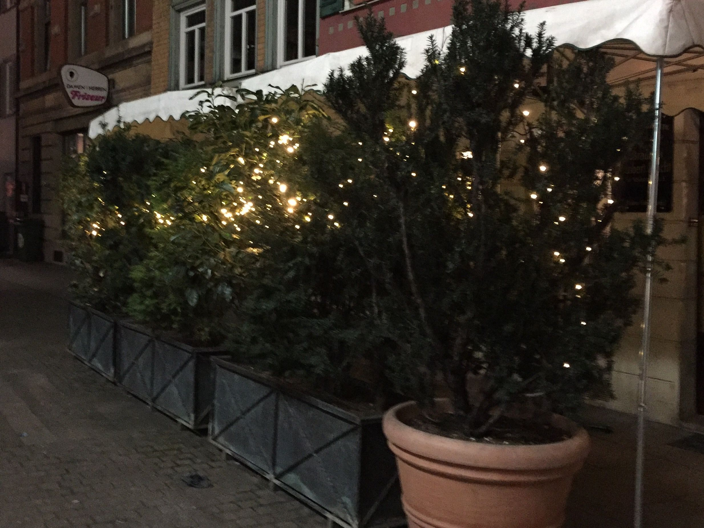 Need big bushes or trees with fairy lights in the garden