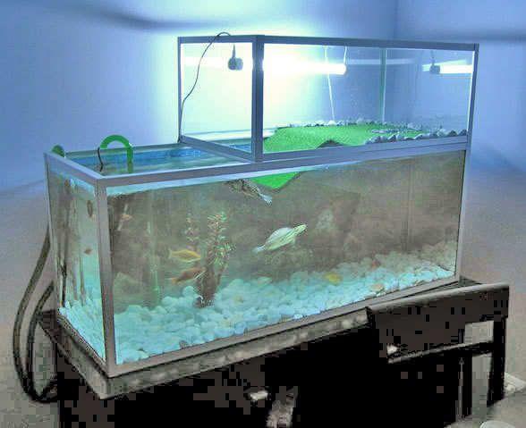 Basking area turtles pinterest turtle aquariums and for Turtle fish tank