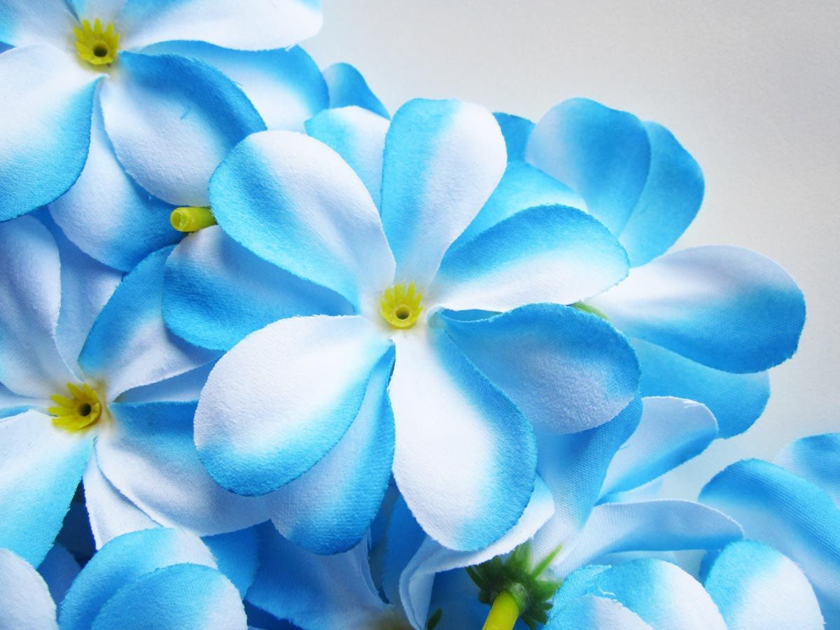 12 blue plumeria frangipani heads artificial silk flower 3 blue frangipani izmirmasajfo