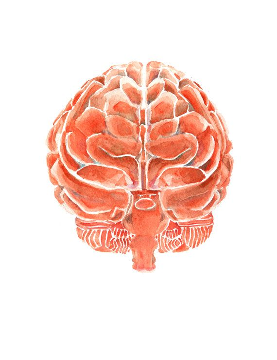 The Posterior Brain in Clay Red - Brain Art Watercolor - Brain Print ...