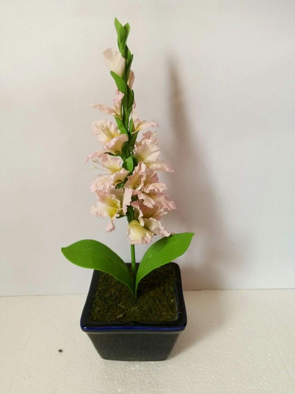 Clay gladiolus