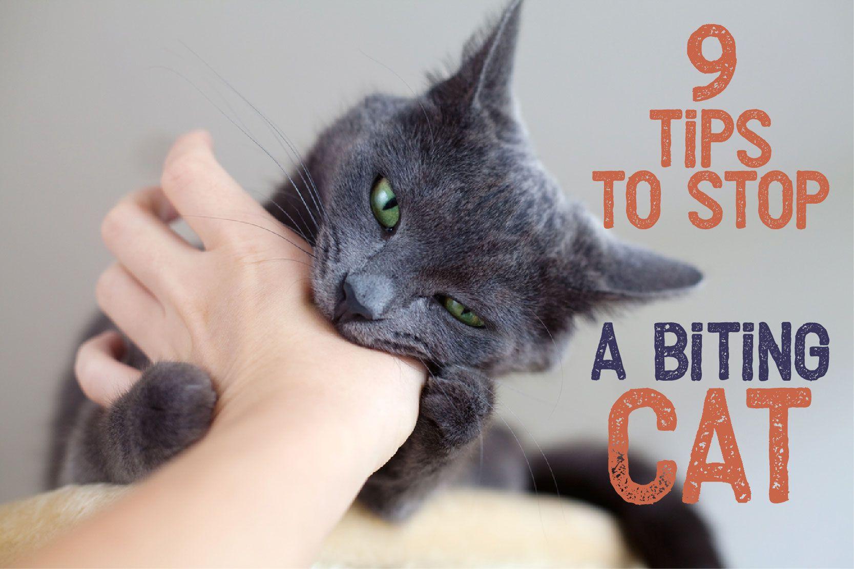 9 Tips To Stop A Biting Cat Cat Biting Cat Behavior Cat Behavior Problems