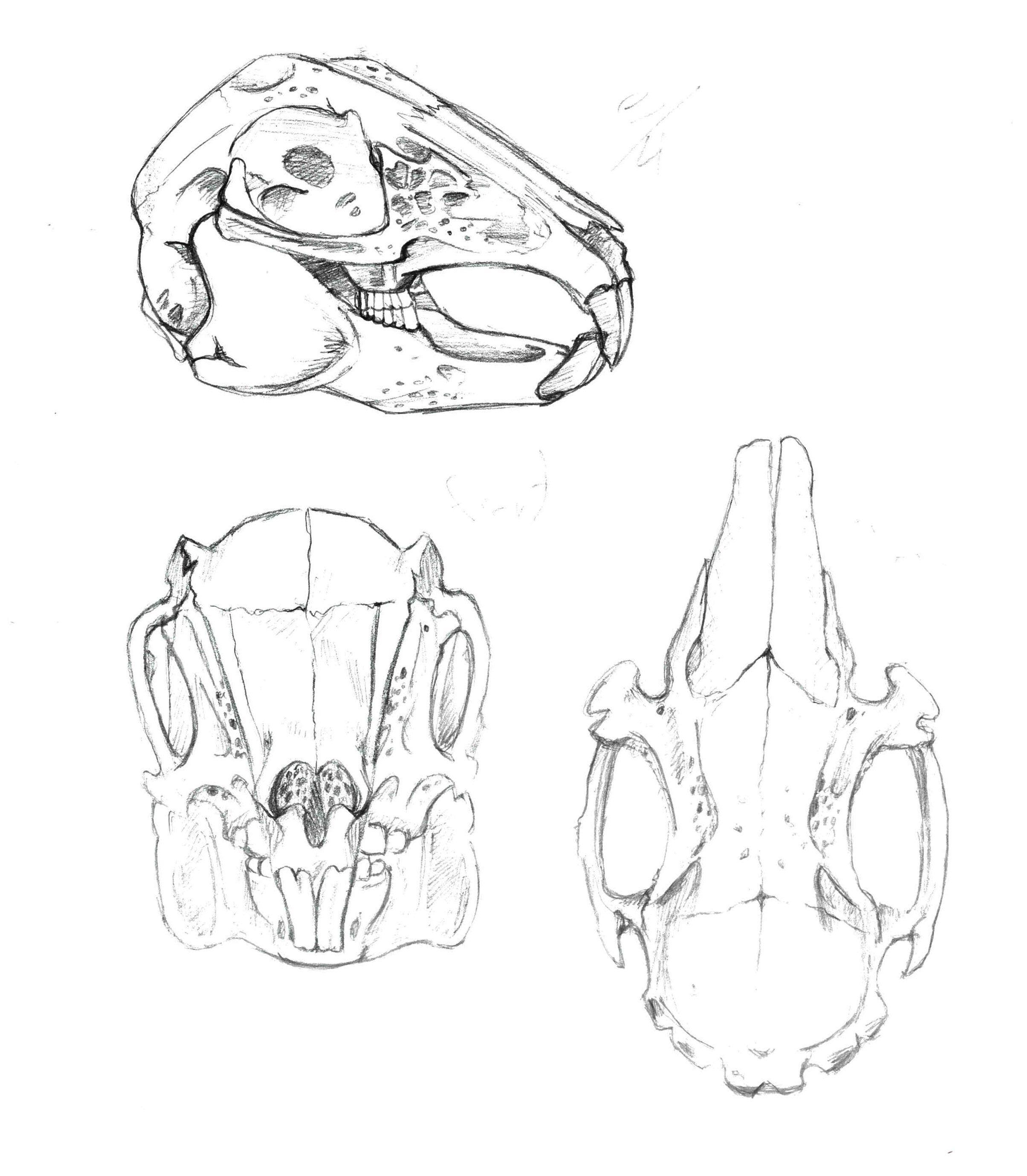 Image result for rabbit skull drawing tattoo pinterest jpg 2409x2758 bunny skull drawings
