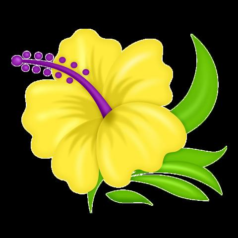 34 3 Imagem Floral Hibisco Desenhos De Flores