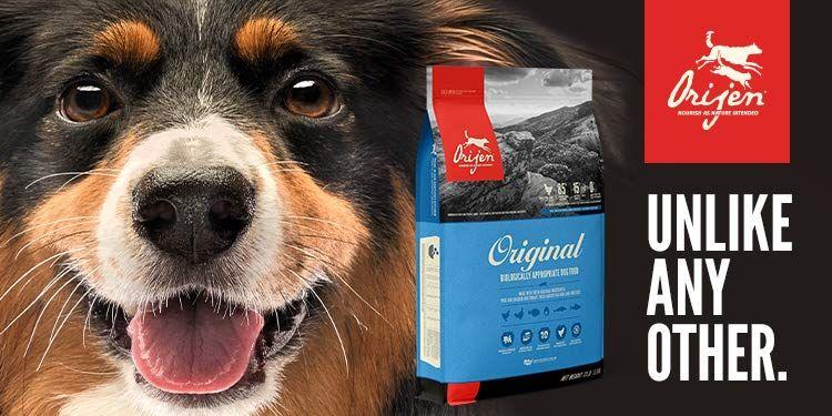 Amazon Com Pet Supplies Pets Service Animal Animals Of The World
