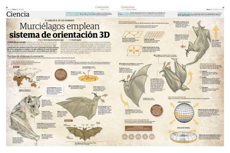 Murcíelagos emplean sistema de orientación 3D