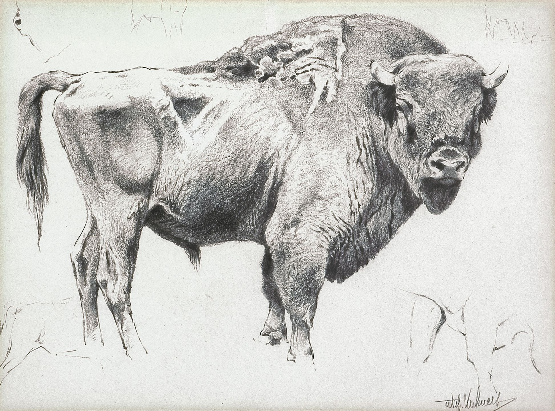 Wilhelm Kuhnert Bison The Coeur d'Alene Art Auction