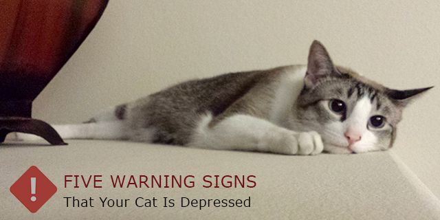 How To Tell If  Your #Kitten Is In Depression? - Five Warning #Signs – That Your #Cat Is #Depressed -