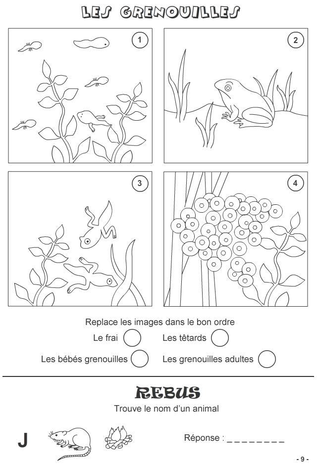 Jeux à imprimer pour enfants de 7 ans et plus - page 9 | Grenouille, Jeux a imprimer, Tétard ...